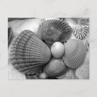 Black and White, Cockle Shells Save the Date Announcement Postcard