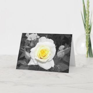 Black and White Rose with Yellow Focal Card