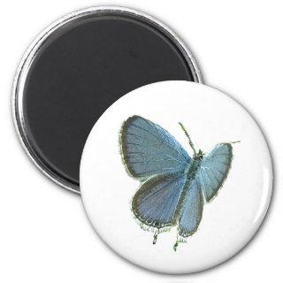 Eastern-Tailed Blue Butterfly Magnet