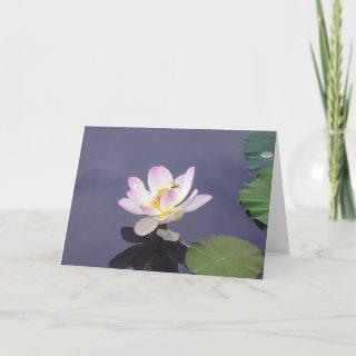 Pink Lotus with Dragon Fly Card